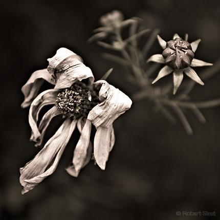 Fleur Fane | news online